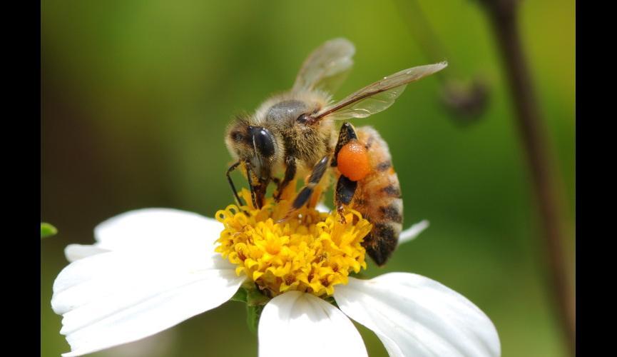 honeybeearbnews