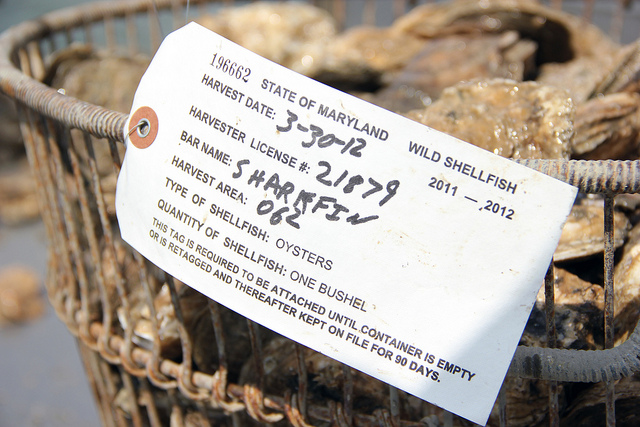 A bushel of oysters with a tag from the 2012 season's last day of oystering.
