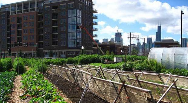 Urban agriculture takes place in and around a town or city's economic and ecological system.